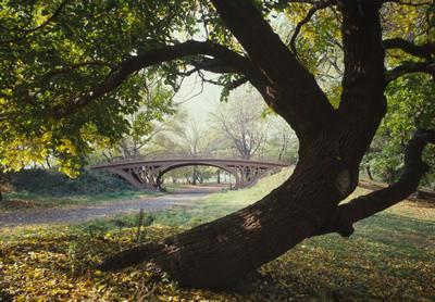 Gothic-tree